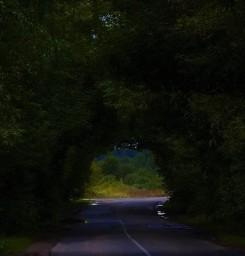 Сказочный туннель из деревьев в деревне Каликино